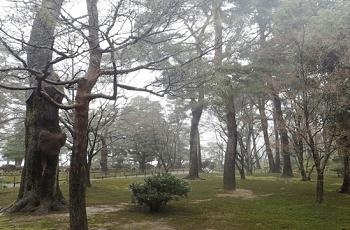 林の中の落木