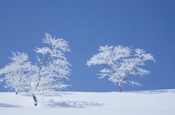 青空と雪原の木