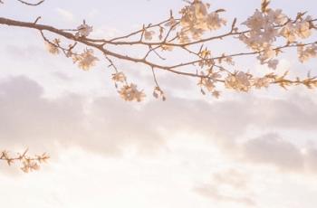 桜の花と夕暮れの空