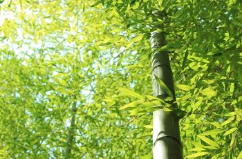 日が射している竹林