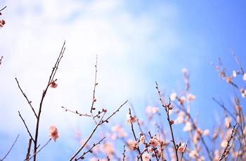 空に向かって伸びる梅の木の枝
