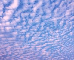 薄い茜色に染まった鰯雲