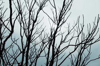 枯木と冬の空