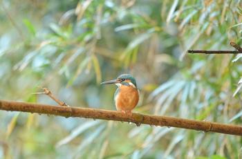 雨の中の一羽の鳥