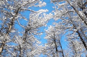 木立に積もった雪と青空
