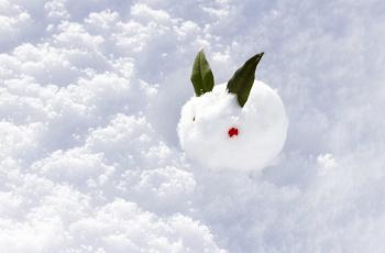 雪の中の一匹の雪うさぎ