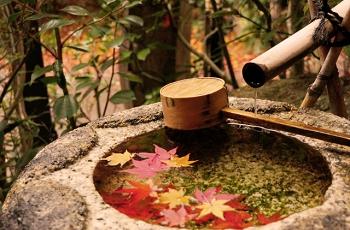 手水鉢の水に浮かぶ落ち葉