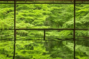 緑一色の風景
