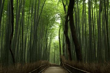 薄暗い竹林の中の道
