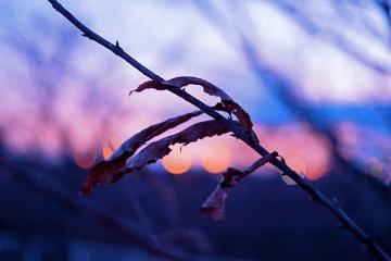 初冬の野の枯葉
