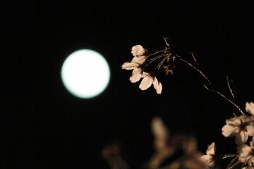 朧月と一輪の花