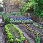 40 Stunning Vegetable Garden Design Ideas Perfect For Beginners (8)
