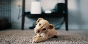 Hoover Power Scrub Elite Pet Reviews – Read this Before Buying
