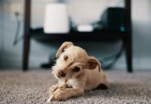 hoover power scrub elite carpet cleaner
