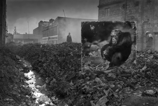 Alleyway With Chimpansee, 2014, © Nick Brandt.
