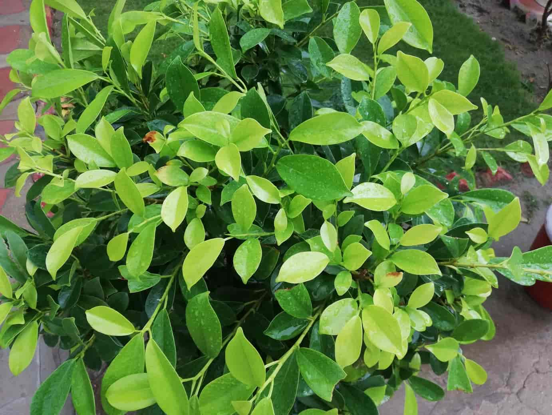 Green Plants After Rain