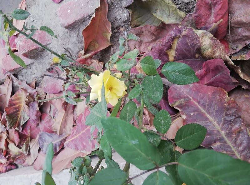 Autumn Pictures Autumn Images