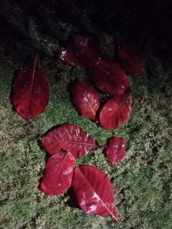 Autumn night photography