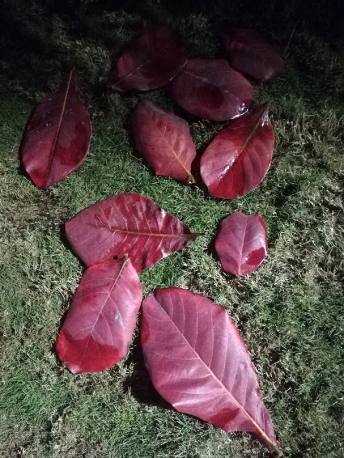 Scattered leaves night photography