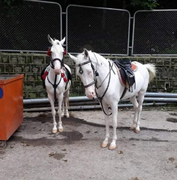White Horse Photography