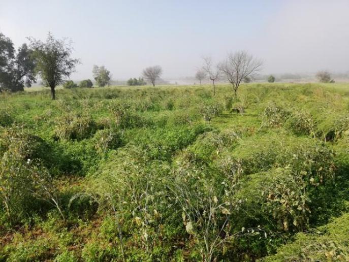 Green Land Photos