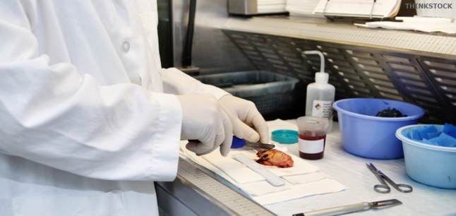 how to become a pathologist in Canada