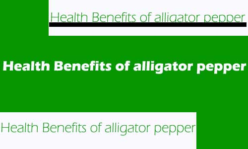 Health Benefits of alligator pepper