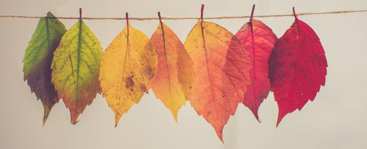 Change Management Blog