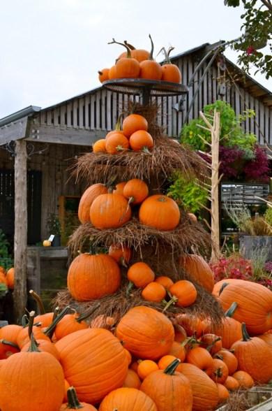 terrain+autumn+pumpkins+fall+pennsylvania+gourds+anthropologie+garden+inspiration+design+inspiration+thanksgiving+halloween2-634x957