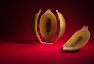 Frutas 4d