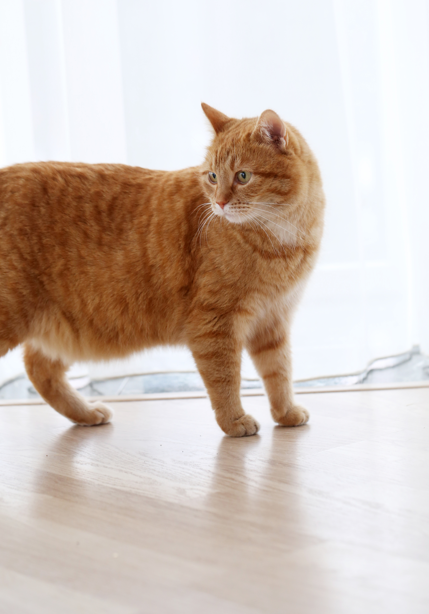 250 Outstanding Orange Cat Names Perfect For Your Ginger Kitty