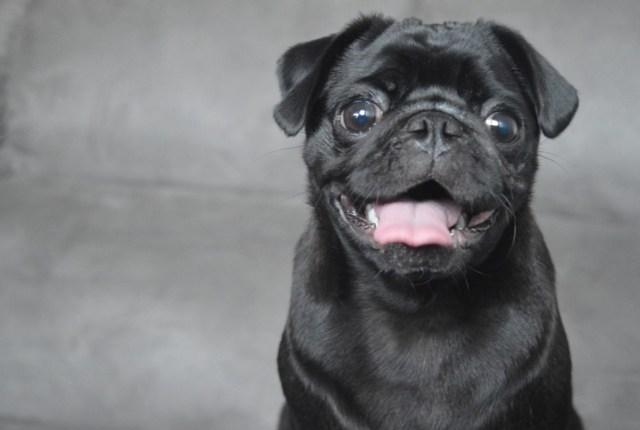 250+ Best Black Dog Names That Are Just Plain Brilliant