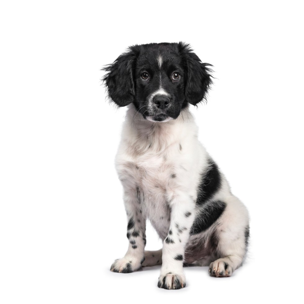 Best Black And White Dog Names For Your Two Tone Pup