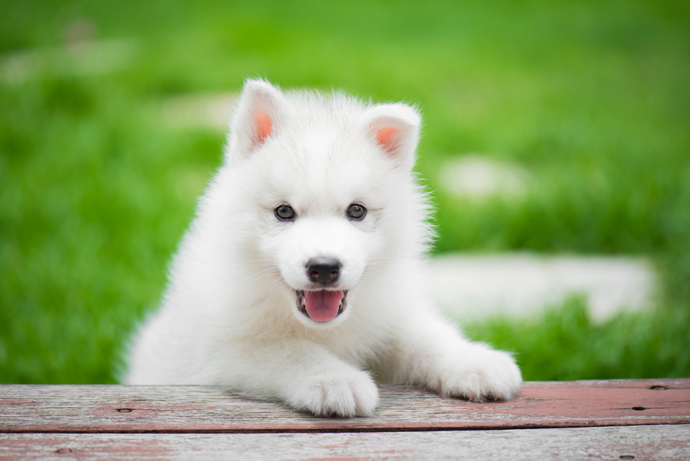 150 Wonderful Names For White Dogs And Puppies