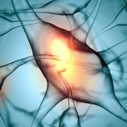 psicologia-percepcion-neuronas