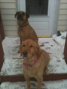 JDog and Dag sitting on a snowy step waiting to go inside.