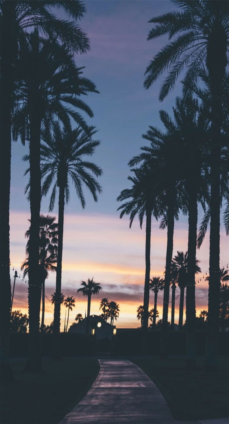 iPhone wallpaper - 100 awesome iphone wallpaper to download ,Palm tree iPhone Wallpaper, beach iphone wallpaper , summer iphone wallpaper