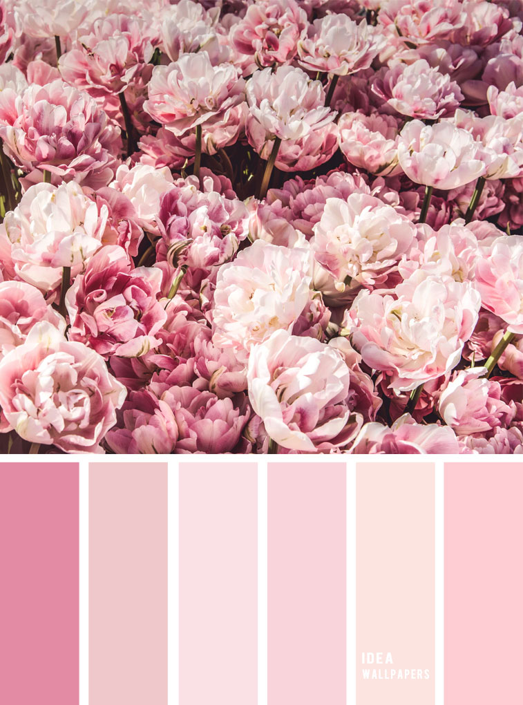 19 The perfect pink color combinations { Pink Peonies }, pink hues color palette,pink and blush colour palette #color #colorpalette