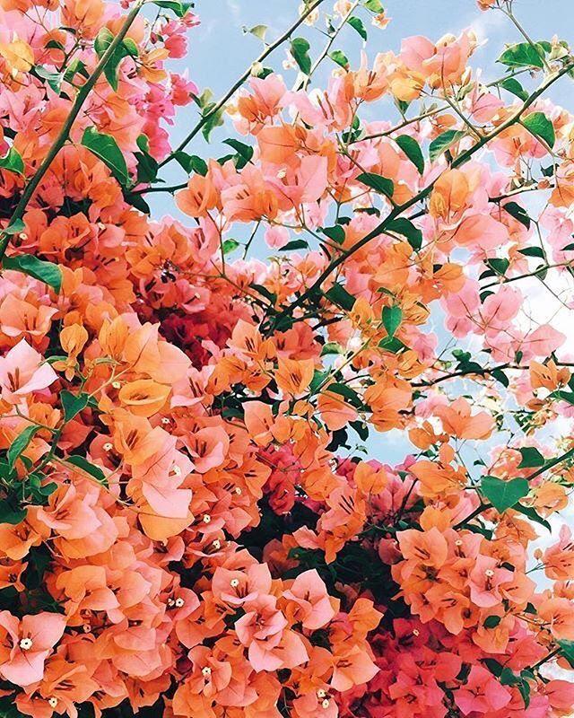 Orange coral flowers