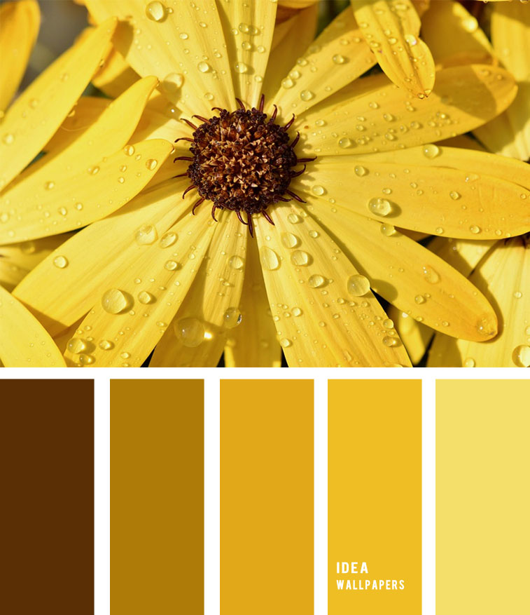 Yellow flower hues Colour Palette 190521 , color palette , yellow and brown #color flower inspired