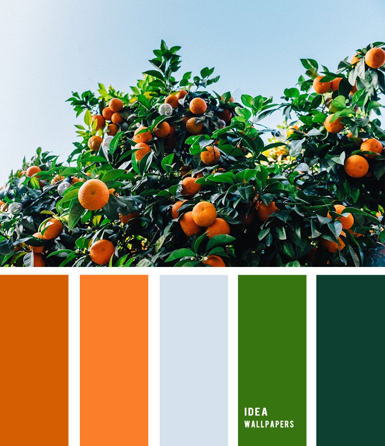 Tangerines Tree Inspired - Orange and Green Color Palette , color palette , green and orange color palette, light blue green and orange , citrus color palette #pantone #color