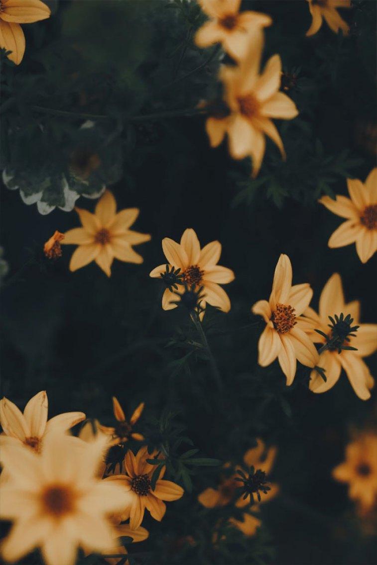 Pretty Yellow Wild Daisies 45 Beautiful Flower Iphone Wallpaper