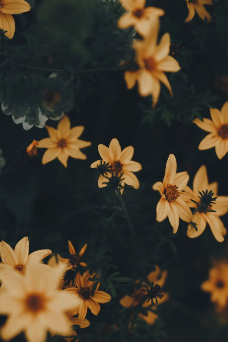 45 Beautiful flower iphone wallpaper ideas ,Pretty yellow wild daisies, iphone wallpaper iphone wallpaper, iphone xs, iphone 7s, iphone 8s #wallpaper