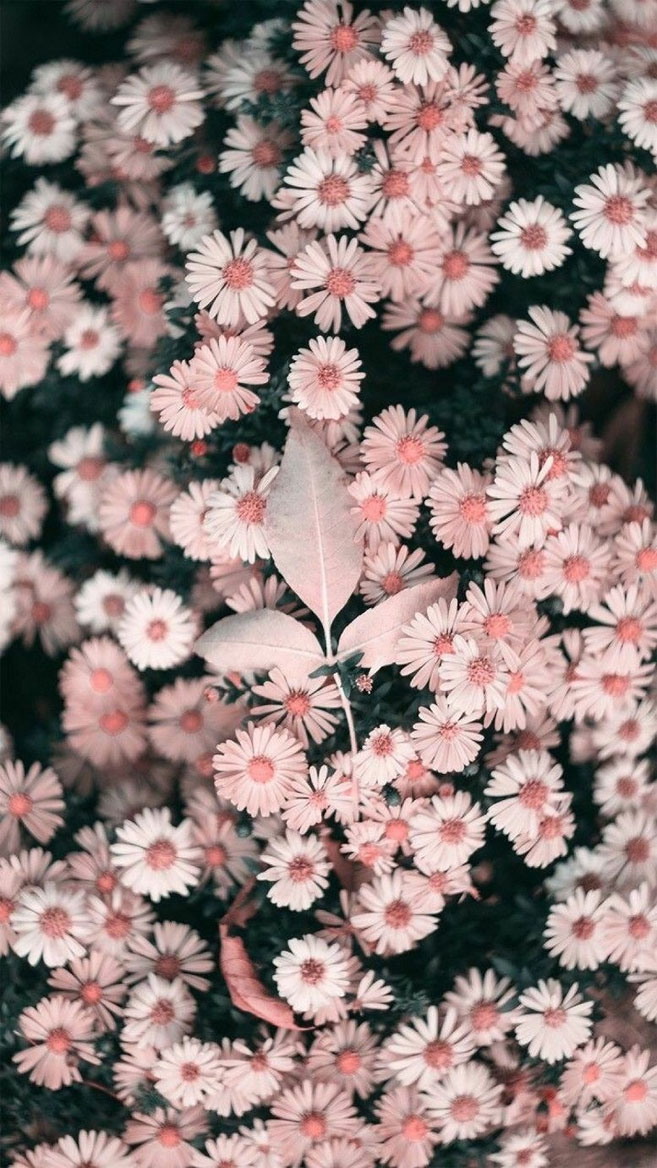 Beautiful flower iPhone wallpaper , Idea Wallpapers , iPhone