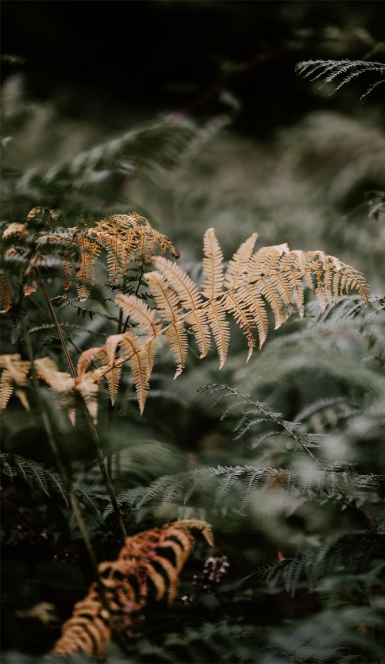 beautiful iPhone X wallpapers that have a calming affect, check out these beautiful fern leaves, botanicals, leaf iPhone wallpaper. Leaf Phone Wallpaper - iphone background #wallpaper #background