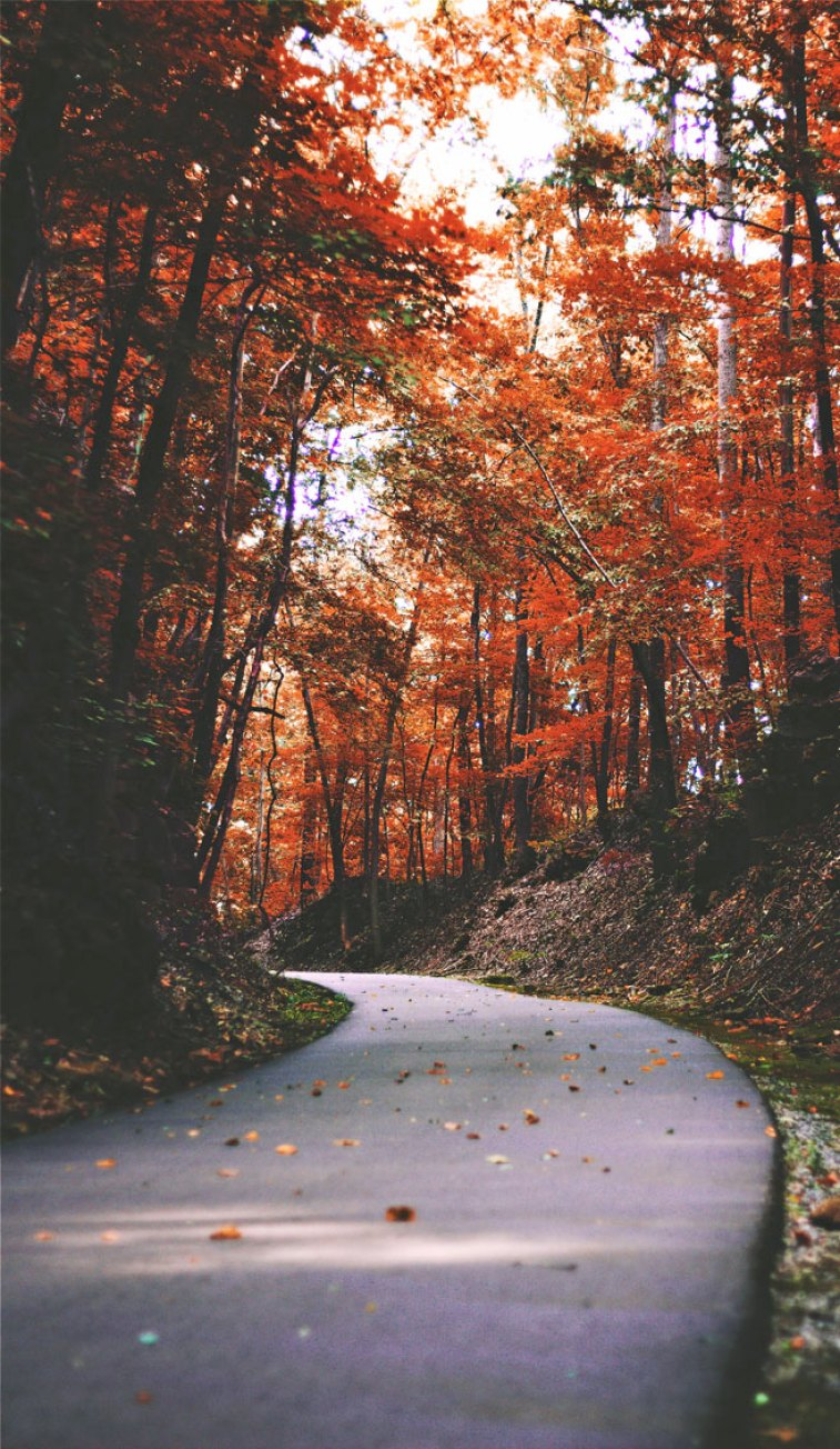 Amazing autumn road with shades of burnt orange colour