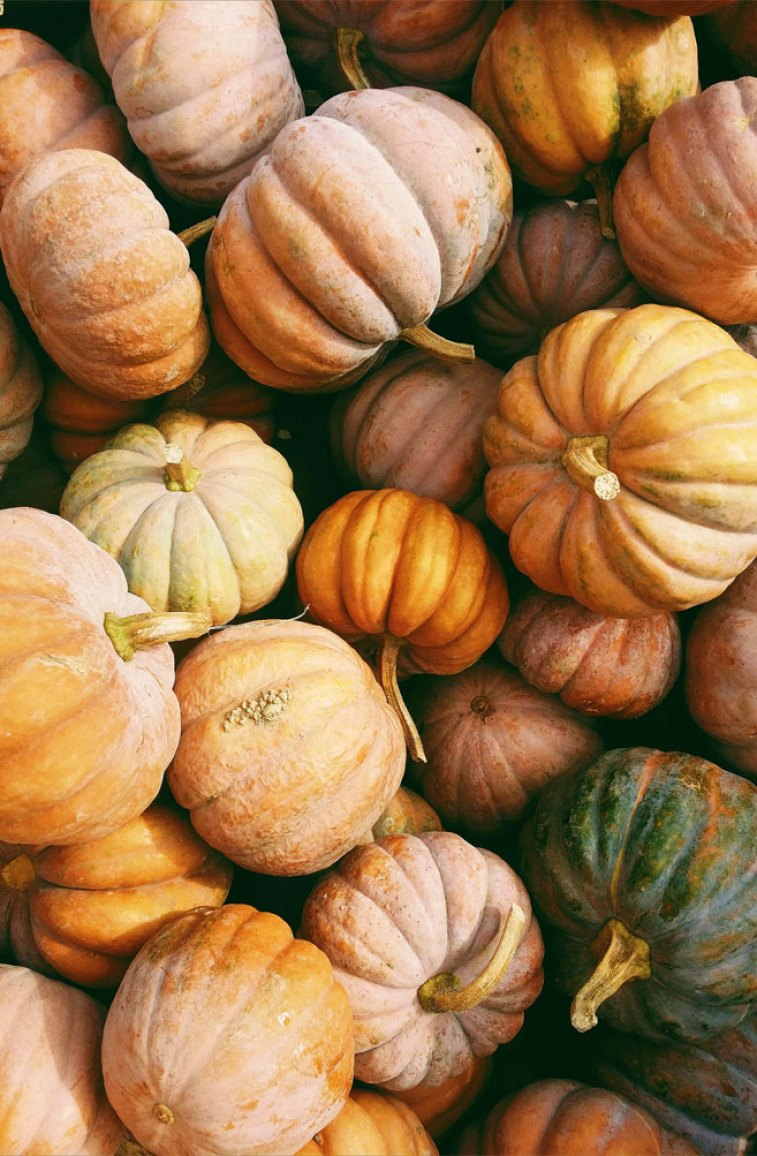 :) The perfect different size pumpkins photo, many differentshapes,sizesand varieties ofpumpkins