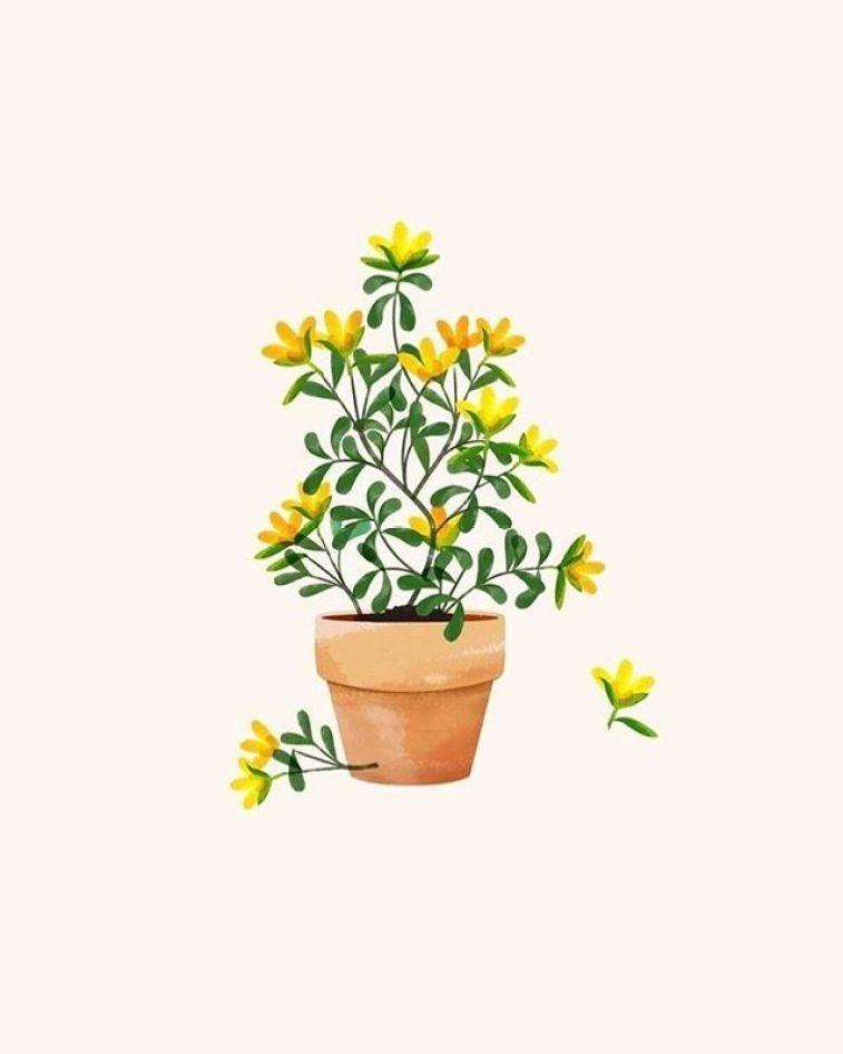 Yellow flower in terracotta pot , illustrate , watercolor #wallpaper