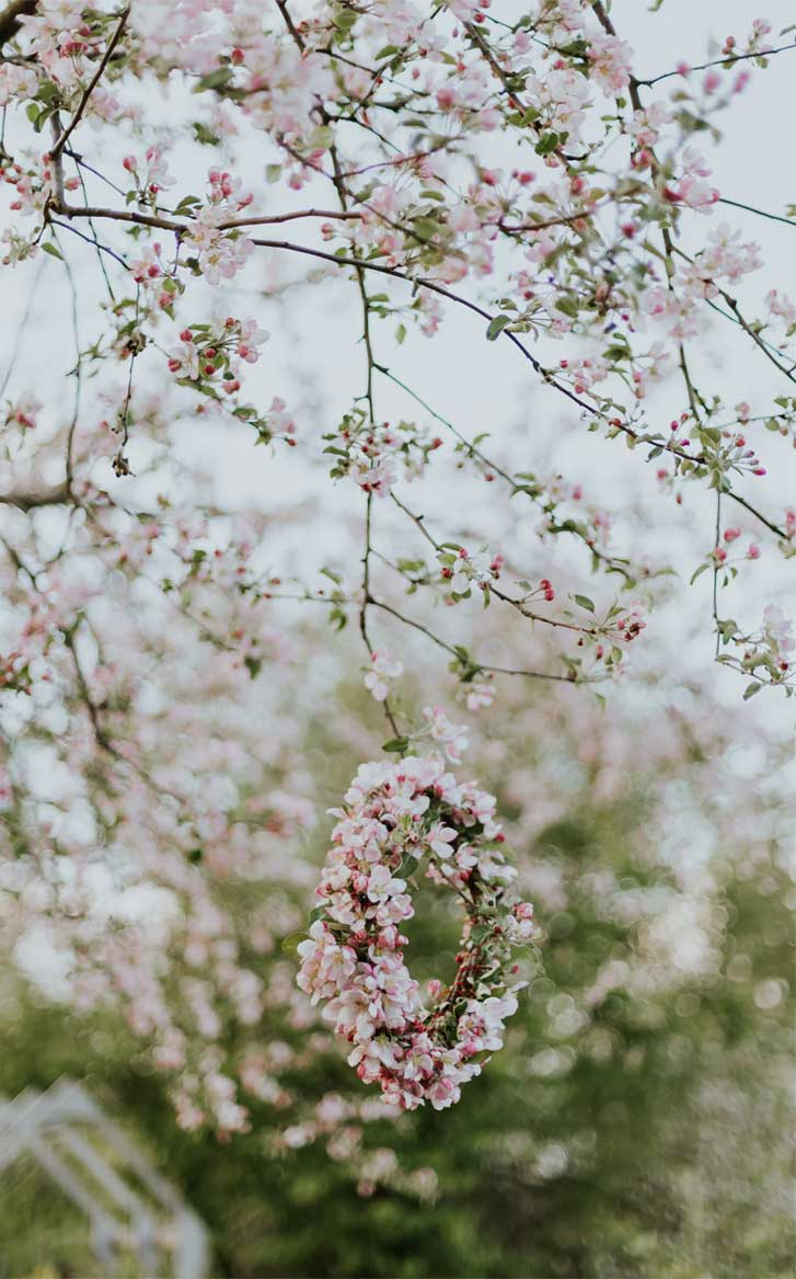 Beautiful spring flowers , blossoms , iphone wallpaper #flowers #spring #blossoms