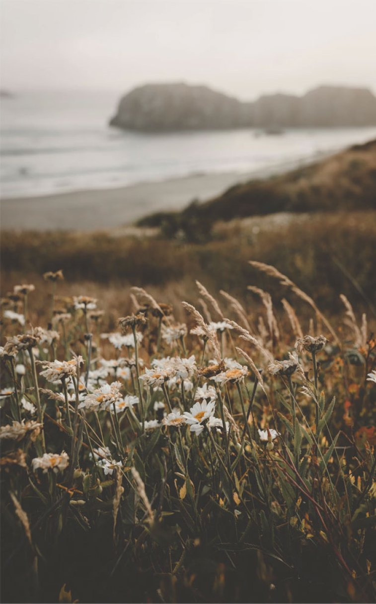 Pretty wild flowers , iphone wallpapers ,wallpapers